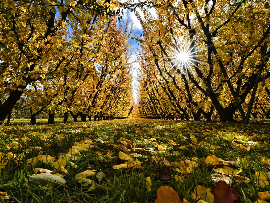 Autumn Colours, Central Otago, NZ